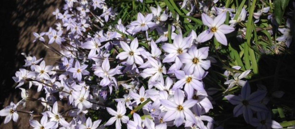 Brisbane Funeral Musicians-purple flowers
